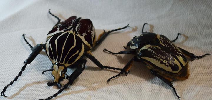 40 лет тюрьмы за дохлого жука